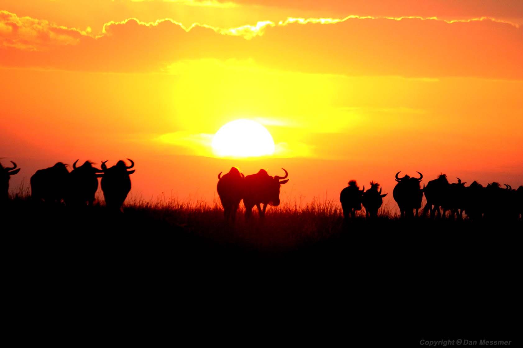 Afrikada safari