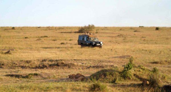 Mara'da safari